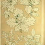 Weinblätter, Stechpalme, Eiche