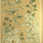 Wildrose, Efeu und Brombeere