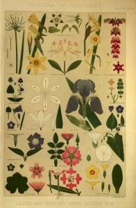Blätter und Blüten aus der Natur