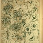Geißblatt und Winde