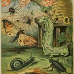 Schnecke, Käfer, Raupe, Spinne, Biene und Nachtfalter