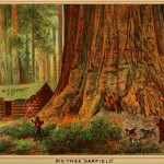 "Beauties of California - Big Tree ""Garfield"""