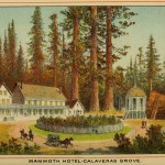 Beauties of California - Mammoth Hotel - Calaveras Grove