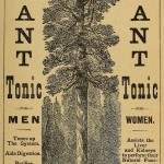 Beauties of California - Giant Tonic - Mammutbaum-Medizin