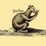 Opossum (Beurtelratte)