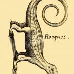 Rocquet (Roquet) - Karibik Anolis - Anolis roquet