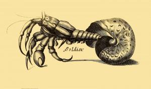 Soldier Crab - Einsiedlerkrebs - Hermit Crab
