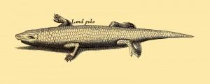 Land Pike - ein Reptil das wie ein Fisch aussieht