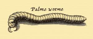 Tausendfüßer - Palmer worme