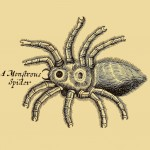 Vogelspinne - A Monstrous Spider
