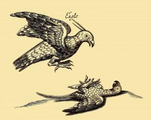 Adler von Orinoca - The Eagle of Orinoca