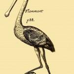 Flammant - Flamingo