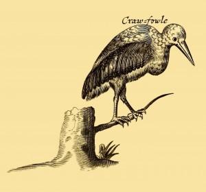 Craw-fowle - Pelikan - Grand Gosier