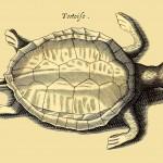 Schildkröte - Tortoise