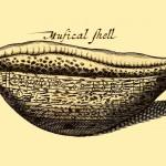 Musical Shell - Musikalische Muschel