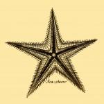 Seestern - Sea-starre