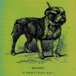 Bulldog - PopArt Variante