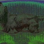 Skye Terrier - PopArt Variante