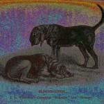 Bluthund - PopArt Variante