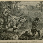 Hunting the Elephant on Ox-Back