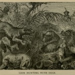 Lion Hunting with Dogs