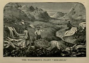 "The Wonderful Plant ""Mirabilis"""