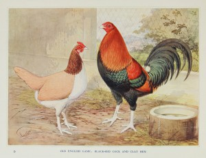 Old English Game: Black-Red Cock and Clay Hen