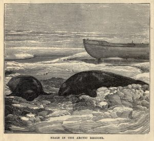 Seals in the Arctic Regions